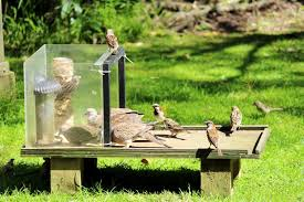 bird attracting native plants give it a break with the bird feeders wired