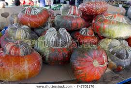 ornamental squash stock images royalty free images vectors
