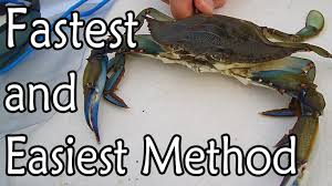 how to clean bluestone how to clean a blue claw crab youtube