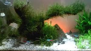 Aquascape Moss 10g Diy Aquascape Moss Tree Progress Video Youtube