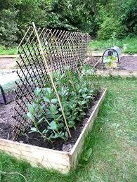 harbill u0027s garden may 2011