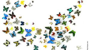 butterfly design wallpaper 2018 screensavers