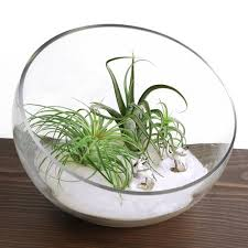 bowl terrarium large