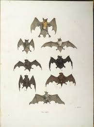 a whole lot of public domain bat images for crafts color and