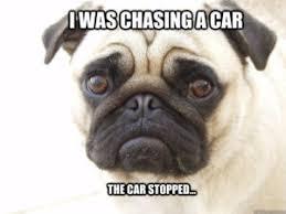 Sad Pug Meme - 10 funny pug memes