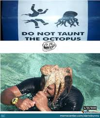 Octopus Meme - taunting an octopus by dariobunny meme center