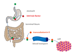 6 vitamins and nutrition u2022 functions of cells and human body