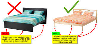 bugs in bedroom impressive geektick how to prevent bed bugs throughout bug