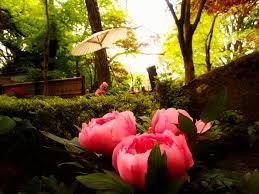 Fowers Flowers Spring Fowers Japanese Taito Pink Garden Flowers Japan