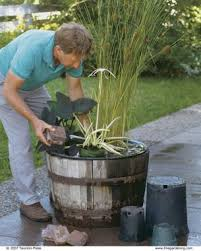 make a big splash with a tiny water garden finegardening