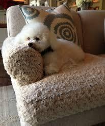 Dog Sofa Cover by Malibu Interior Designer Creates Unique Solution For Snuggle Happy