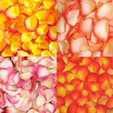 Real Rose Petals Rose Petals Fresh Real Flower Petals Global Rose