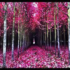 pretty trees photonate flickr