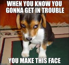 Puppy Face Meme - image tagged in guilty puppy imgflip