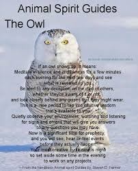 today s animal spirit guide the screech owl if a screech owl shows
