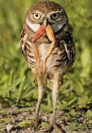 1816 best birds of prey images on pinterest birds of prey