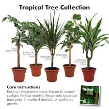 names of indoor house plants indoor tropical house plants