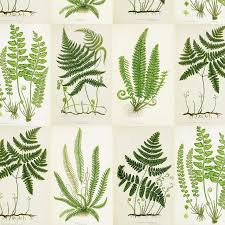 botanical wrapping paper 11 best sass stationery images on gift tags