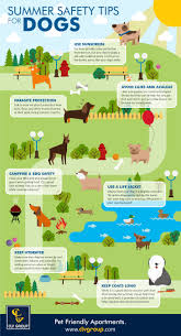 summer safety tips for dogs infographic clv group blog for