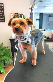 Pet Grooming New York Mills NY