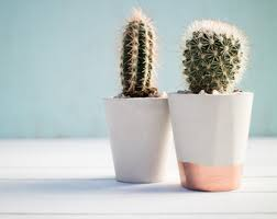 planters u0026 pots etsy