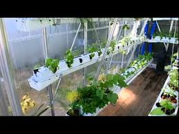 sustainable urban agriculture hydroponic vegetable greenhouse dv
