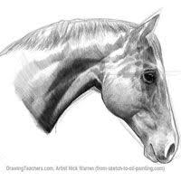 86 best drawings images on pinterest horse drawings drawing