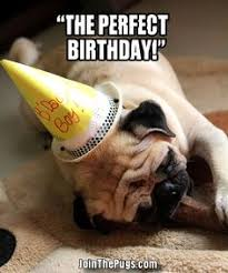 Pug Birthday Meme - birthday pug meme 100 images pug memes funny happy birthday pug