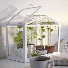 ikea mini greenhouse u2026 pinteres u2026