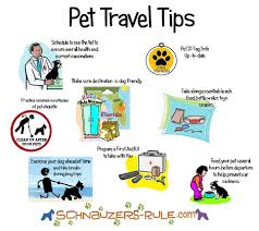 travel info images Dog car travel tips for safety jpg