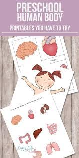 best 25 human body organs ideas on pinterest organs of human