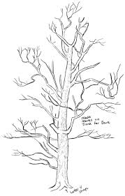 drawing a tree step by step how to draw trees drawing realistic