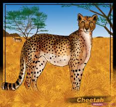 how to draw a cheetah step by step safari animals animals free