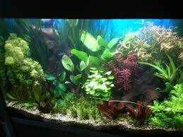 Aquarium Tropical Plants Aquarium Plants True Aquatic Sets At Aquarist Classifieds