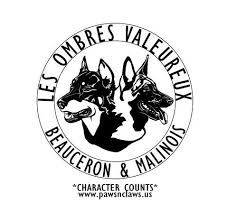 belgian malinois breeder california les ombres valeureux malinois belgian malinois breeder