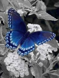 vlinder gedicht butterfly reflection and moth