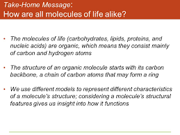molecules of life worksheet the best and most comprehensive