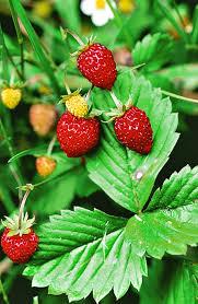 decoration avec des pots en terre cuite 20 plantes faciles pour tous les jardiniers détente jardin