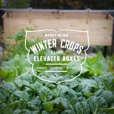 growing with plants how to grow winter crops in an elevated cedar