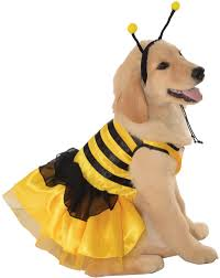 Extra Large Dog Halloween Costumes Pet Costumes