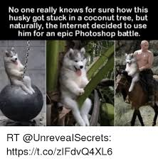 Tree Meme - 25 best memes about coconut tree coconut tree memes