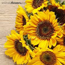 sunflowers for sale 10 garden flowers that can help to sell your property pollennation