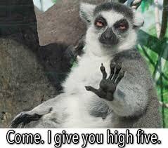 High Five Meme - 14 best memes high fives images on pinterest meme memes and