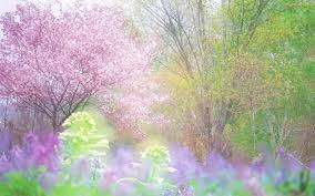 30 spring backgrounds wallpapers images pictures design