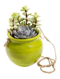 Hanging Succulent Planter by Succulent Clay Planter Echeveria Sticks On By Sourcesucculents
