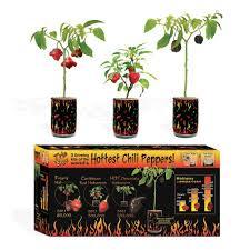 vegetable plants edible garden the home depot