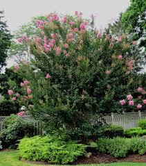 Pink Spring Flowering Shrubs - a guide to northeastern gardening deciduous trees shrubs