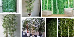 artificial bamboo plant outdoor indoor decorative bamboo plants