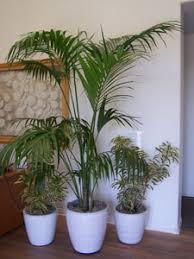 Make Your Office More Inviting Office Plantscapes U2013 Growing Roots