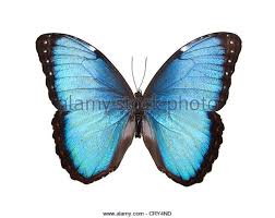black and white butterfly stock photos black and white butterfly